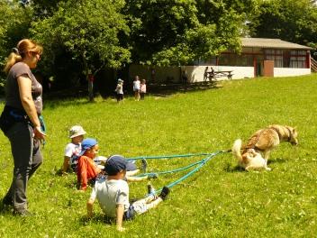 activite-cani-rando